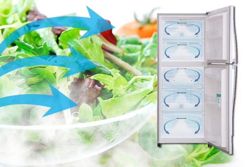 Luồng khí lạnh vòng cung của tủ lạnh Toshiba GR-S21VPB